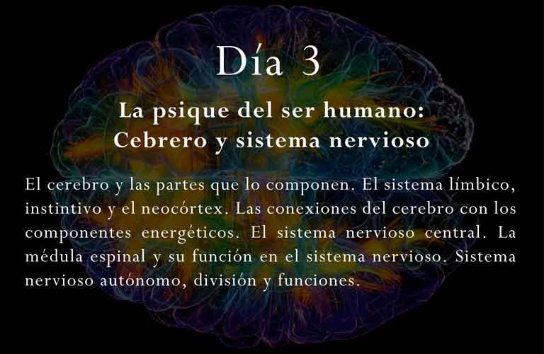 Curso-bioenergetica-multidimensional-terapeutas-clase-cerebro-sistema-nervioso